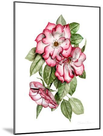 Portland Roses-Shealeen Louise-Mounted Art Print