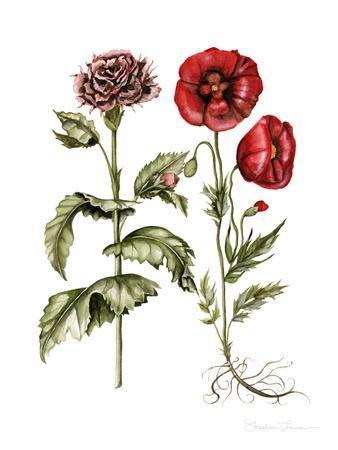 Carnation And Poppies-Shealeen Louise-Framed Art Print