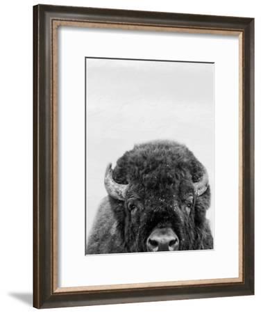 M Bison-Marcus Prime-Framed Art Print