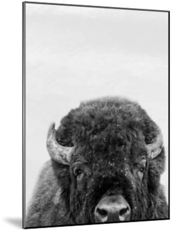 M Bison-Marcus Prime-Mounted Art Print