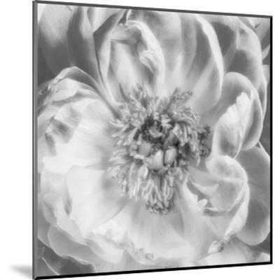 Blooming Intellect 3-Dianne Poinski-Mounted Art Print