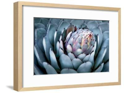 Blue Aloe-Dennis Frates-Framed Art Print
