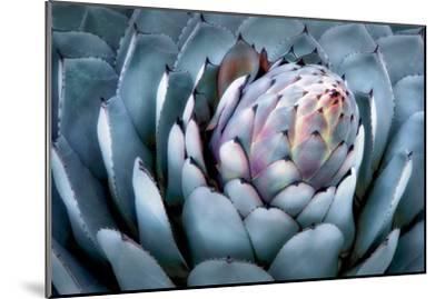 Blue Aloe-Dennis Frates-Mounted Art Print