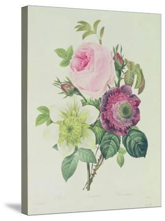Rose, Anemone and Clematide-Pierre-Joseph Redout?-Stretched Canvas Print