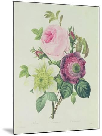 Rose, Anemone and Clematide-Pierre-Joseph Redout?-Mounted Giclee Print