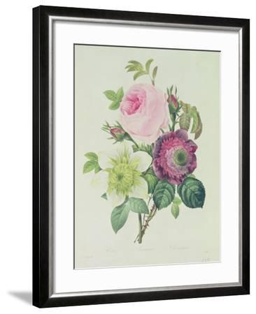 Rose, Anemone and Clematide-Pierre-Joseph Redout?-Framed Giclee Print