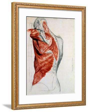 Human Anatomy, Muscles of the Torso and Shoulder-Pierre Jean David d'Angers-Framed Giclee Print