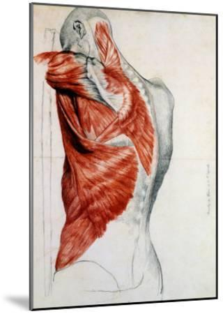 Human Anatomy, Muscles of the Torso and Shoulder-Pierre Jean David d'Angers-Mounted Giclee Print