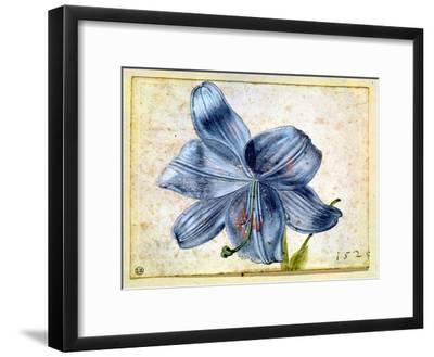 Study of a Lily, 1526-Albrecht D?rer-Framed Giclee Print