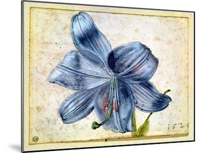 Study of a Lily, 1526-Albrecht D?rer-Mounted Giclee Print