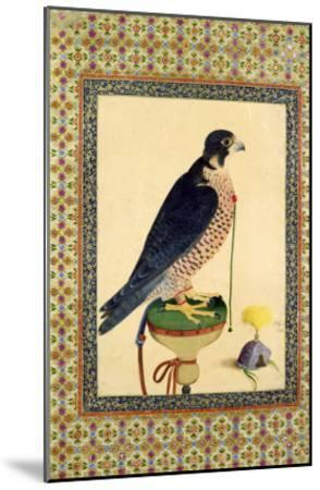 Falcon, from a Moraqqa--Mounted Giclee Print