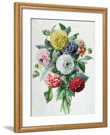Dahlia- Marie-Anne-Framed Giclee Print