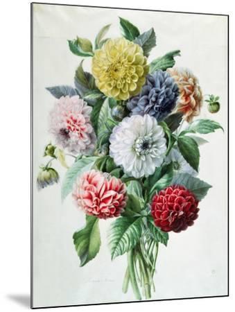 Dahlia- Marie-Anne-Mounted Giclee Print