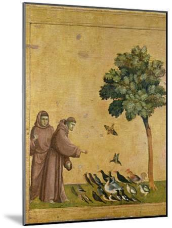 St. Francis of Assisi Preaching to the Birds-Giotto di Bondone-Mounted Giclee Print