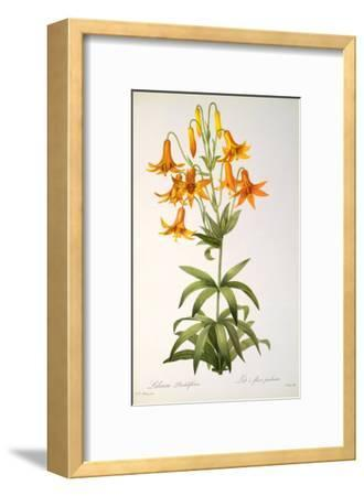 Lilium Penduliflorum, from Les Liliacees, 1811-Pierre-Joseph Redout?-Framed Giclee Print
