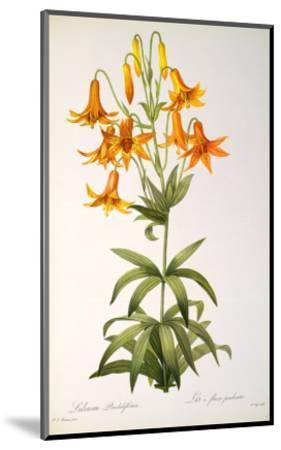 Lilium Penduliflorum, from Les Liliacees, 1811-Pierre-Joseph Redout?-Mounted Giclee Print