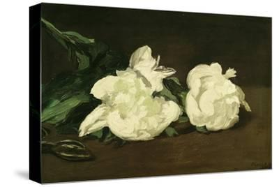 Branch of White Peonies and Secateurs, 1864-Edouard Manet-Stretched Canvas Print