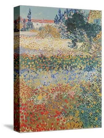 Garden in Bloom, Arles, c.1888-Vincent van Gogh-Stretched Canvas Print