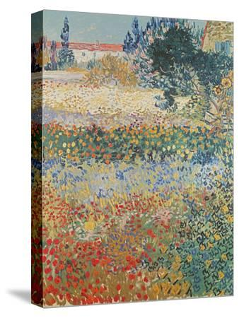 Garden in Bloom, Arles, c.1888-Vincent van Gogh-Stretched Canvas Print