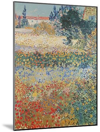 Garden in Bloom, Arles, c.1888-Vincent van Gogh-Mounted Giclee Print
