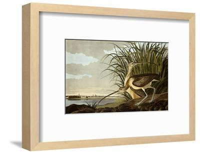 Male And Female Long Billed Curlew (Numenius Americanus) with the City of Charleston Behind-John James Audubon-Framed Premium Giclee Print