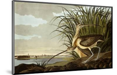 Male And Female Long Billed Curlew (Numenius Americanus) with the City of Charleston Behind-John James Audubon-Mounted Premium Giclee Print