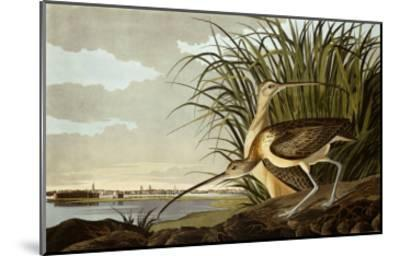 Male And Female Long Billed Curlew (Numenius Americanus) with the City of Charleston Behind-John James Audubon-Mounted Giclee Print