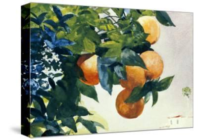 Oranges on a Branch, 1885-Winslow Homer-Stretched Canvas Print
