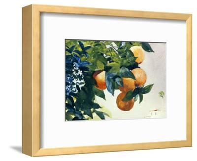 Oranges on a Branch, 1885-Winslow Homer-Framed Premium Giclee Print
