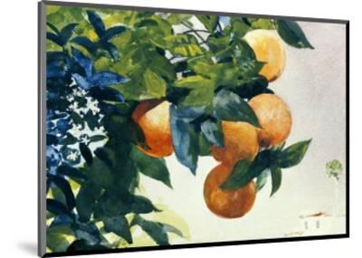 Oranges on a Branch, 1885-Winslow Homer-Mounted Premium Giclee Print