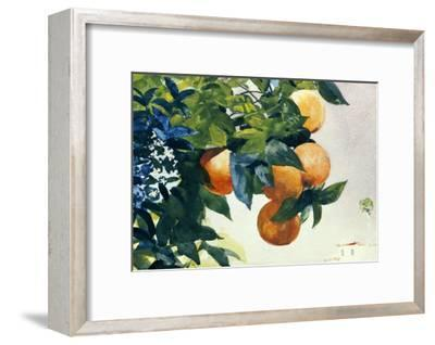 Oranges on a Branch, 1885-Winslow Homer-Framed Giclee Print
