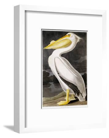 American White Pelican-John James Audubon-Framed Premium Giclee Print