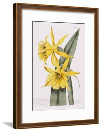 Narcissi-William Curtis-Framed Giclee Print
