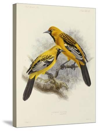 """Hand-Coloured Lithograph from """"Fauna, Flora and Archaeology of Central America""""-J. G. Keulemans-Stretched Canvas Print"""