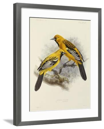 """Hand-Coloured Lithograph from """"Fauna, Flora and Archaeology of Central America""""-J. G. Keulemans-Framed Giclee Print"""