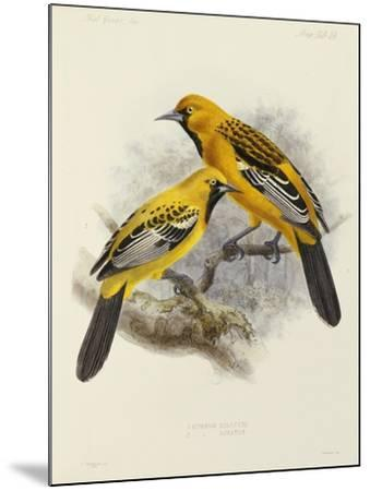 """Hand-Coloured Lithograph from """"Fauna, Flora and Archaeology of Central America""""-J. G. Keulemans-Mounted Giclee Print"""
