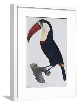 Hand Coloured Engraving of a Toucan, 1806-Francois Levaillant-Framed Giclee Print