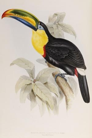 A Monograph of the Ramphastidae or Family of Toucans, 1834-John Gould-Stretched Canvas Print