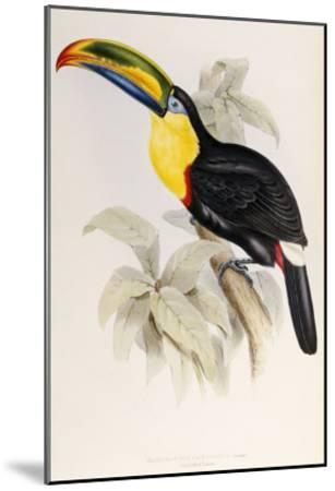 A Monograph of the Ramphastidae or Family of Toucans, 1834-John Gould-Mounted Giclee Print