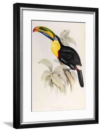 A Monograph of the Ramphastidae or Family of Toucans, 1834-John Gould-Framed Giclee Print