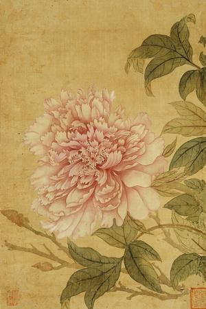 Peony-Yun Shouping-Stretched Canvas Print
