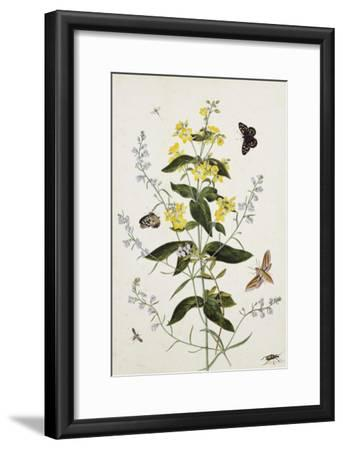 Yellow Loosestrife and Other Wild Flowers-Thomas Robins Jr-Framed Giclee Print
