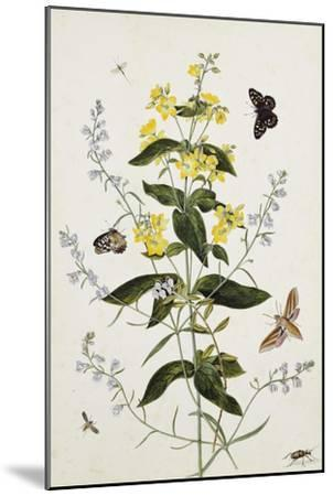 Yellow Loosestrife and Other Wild Flowers-Thomas Robins Jr-Mounted Giclee Print