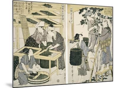 Silk-Worm Culture by Women-Kitagawa Utamaro-Mounted Giclee Print