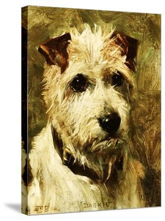 Portrait of a Terrier: Darkie, 1903-John Emms-Stretched Canvas Print