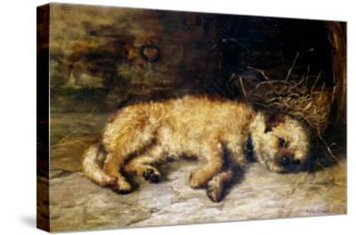 A Border Terrier Puppy-Philip Eustace Stretton-Stretched Canvas Print