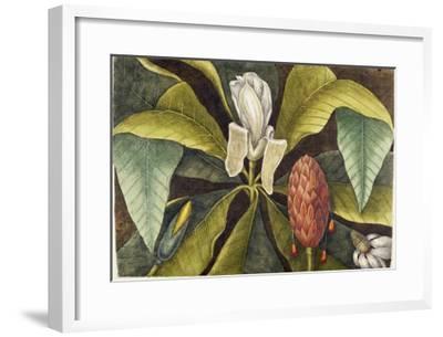 Magnolia-Mark Catesby-Framed Giclee Print