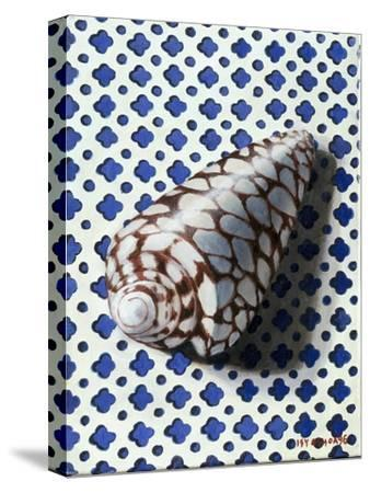 Shell (Coquillage)-Isy Ochoa-Stretched Canvas Print