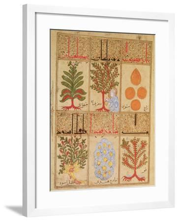 "Medicinal Plants for the Theriac, from ""Treatise of Theriac""--Framed Giclee Print"