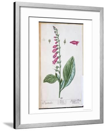 "Digitalis Purpurea, from ""Herbarium Blackwellianum,"" 1757-Elizabeth Blackwell-Framed Giclee Print"